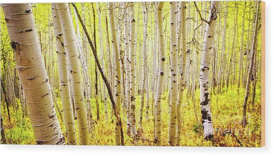 Aspen Grove II Wood Print