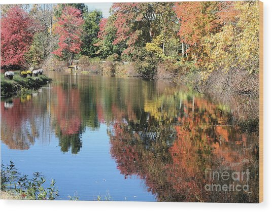 Autumn In New England Wood Print by Amy Holmes