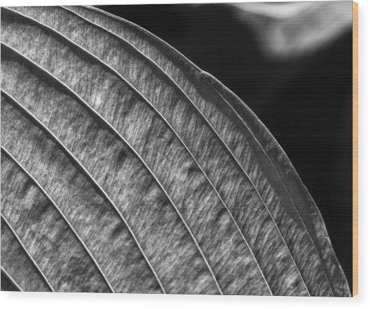 Back Lit Leaf Wood Print by Robert Ullmann