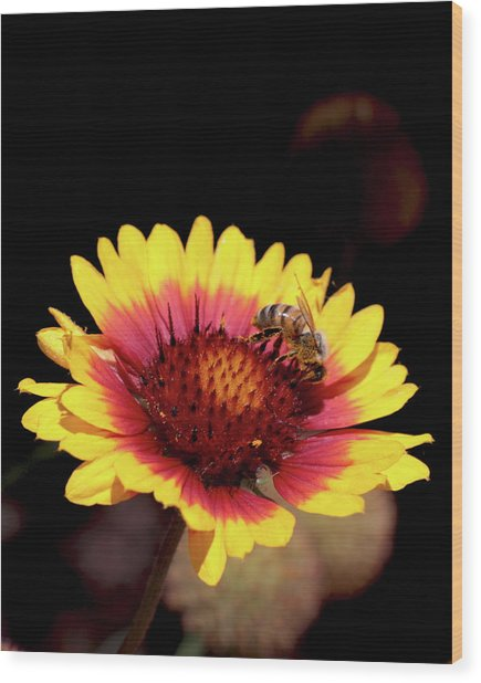 Bee On Flower Wood Print by Michael Riley