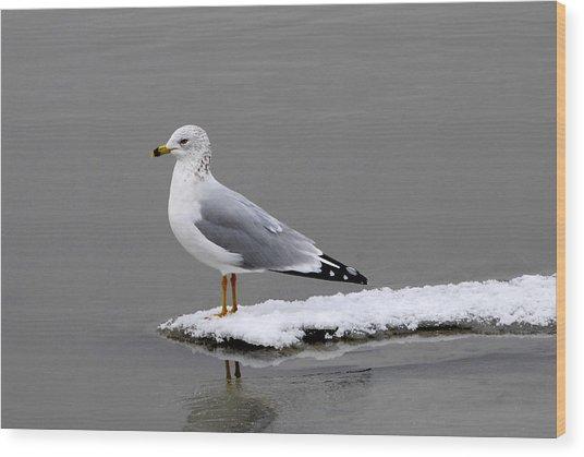 California Seagull Wood Print by Dennis Hammer