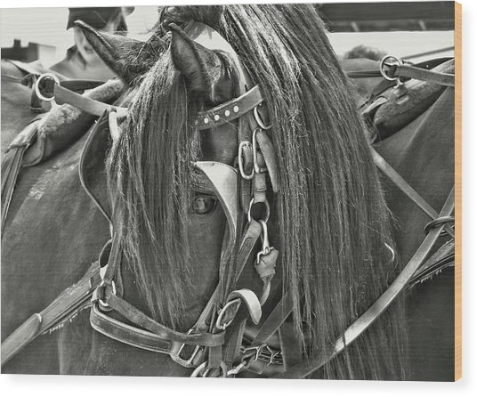Carriage Horse Beauty Wood Print by Dressage Design