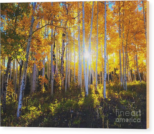 Wood Print featuring the photograph Colorado Autumn by Kate Avery