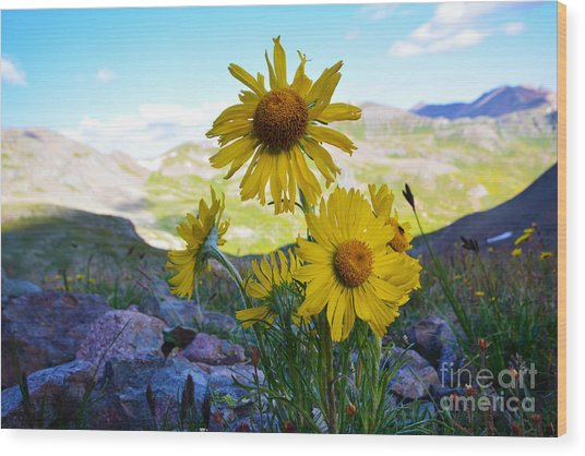 Colorado Wildflowers Wood Print