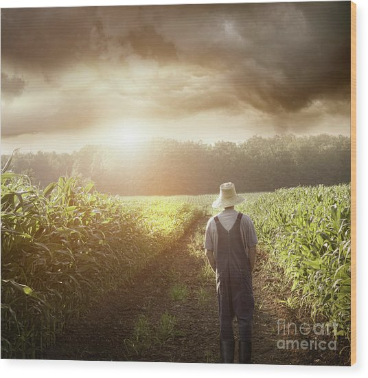 Farmer Walking In Corn Fields At Sunset Wood Print