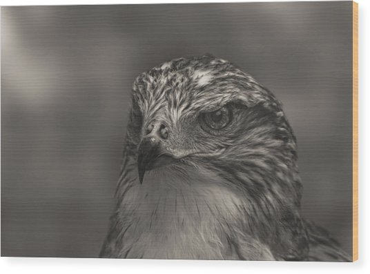 Ferruginous Hawk  Wood Print