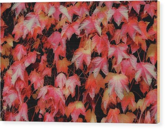 Fiery Foliage Wood Print by JAMART Photography