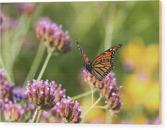 Flight Of The Monarch 1 Wood Print