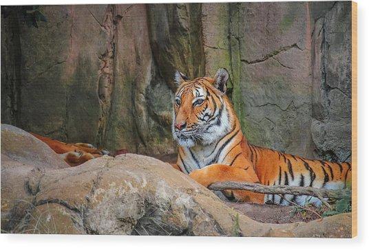 Fort Worth Zoo Tiger Wood Print