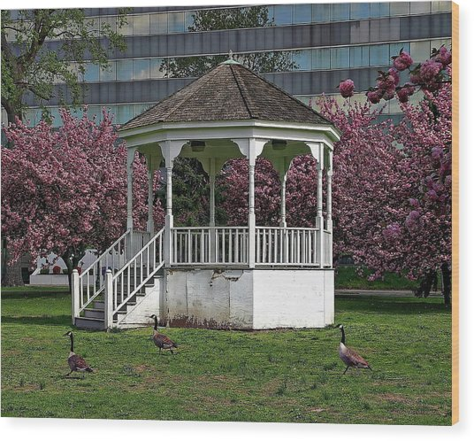 Gazebo In The Park Wood Print