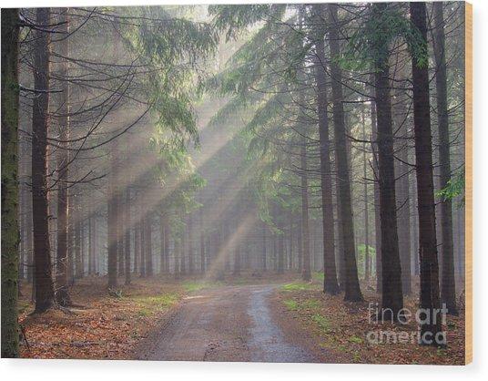 God Beams - Coniferous Forest In Fog Wood Print