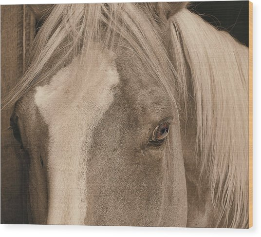 Golden Palomino Wood Print by JAMART Photography