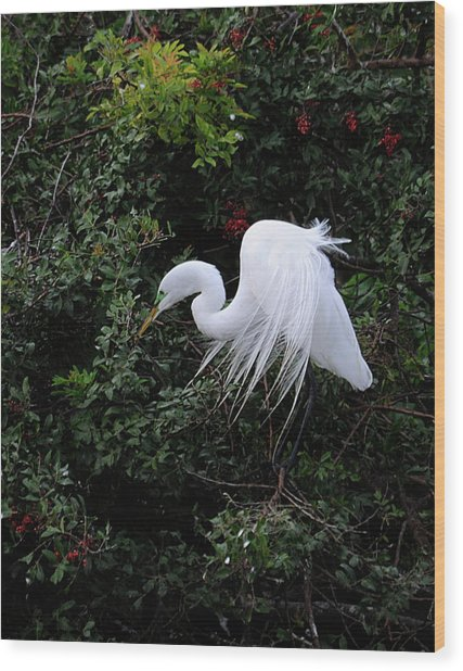 Great Egret Wood Print by Keith Lovejoy
