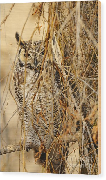 Great Horned Owl Wood Print by Dennis Hammer
