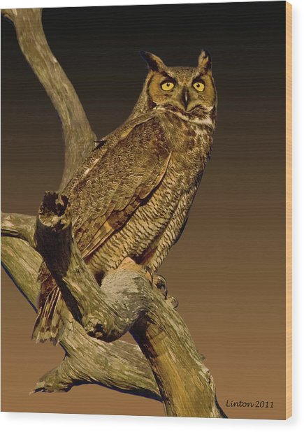 Great Horned Owl Wood Print by Larry Linton