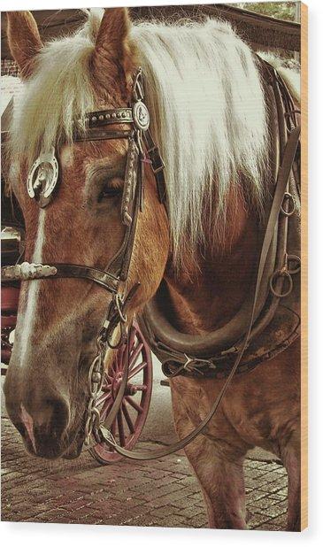 Haflinger Pony Wood Print by Dressage Design
