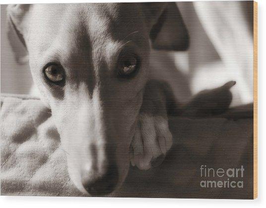 Heart You Italian Greyhound Wood Print