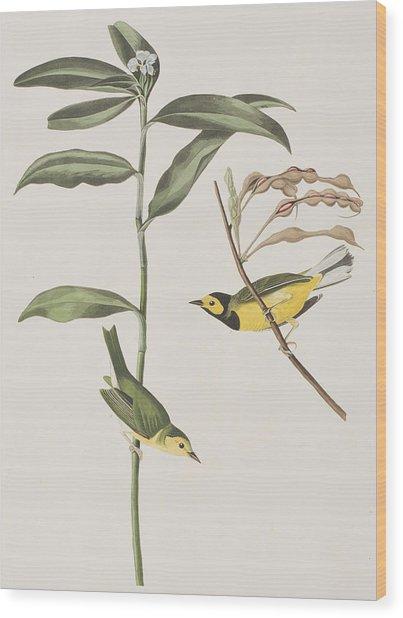 Hooded Warbler  Wood Print