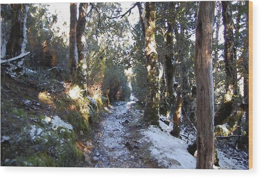 King Billy Forest Cradle Mountain Wood Print by Sarah King