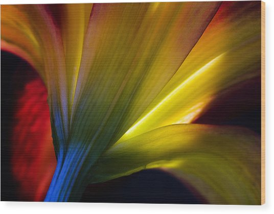 Lily Lumina Wood Print by Shawn Young