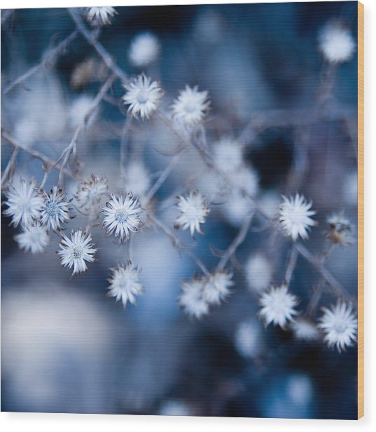 Lonely Winter Wood Print by Ryan Heffron
