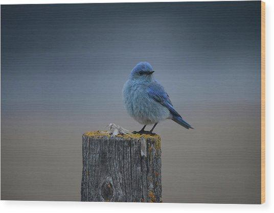 Mountain Bluebird 2 Wood Print