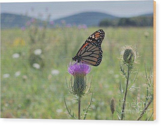 Mountain Meadow Monarch Wood Print
