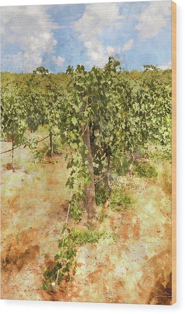 Napa Vineyard In The Spring Wood Print