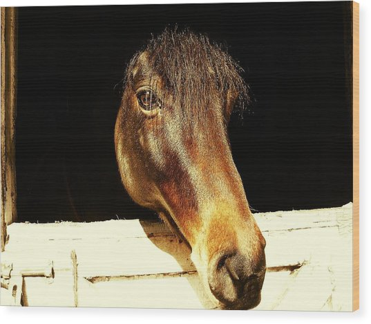 Noble Stallion Wood Print by JAMART Photography