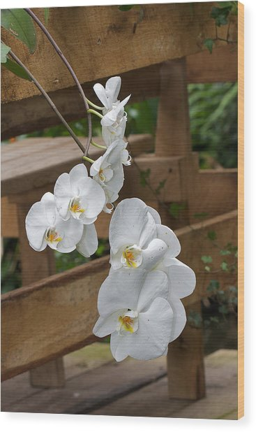 Orchid Wood Print by Theo Tan