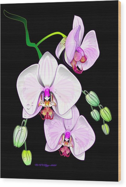 Orchids Wood Print by William R Clegg