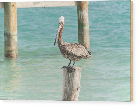 Pelican At Isla Mujeres Wood Print