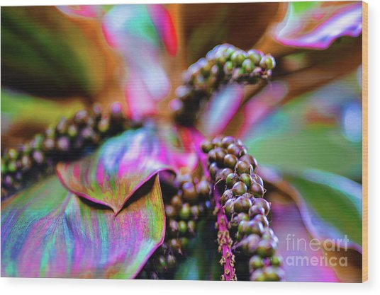 Plants And Flowers In Hawaii Wood Print by D Davila