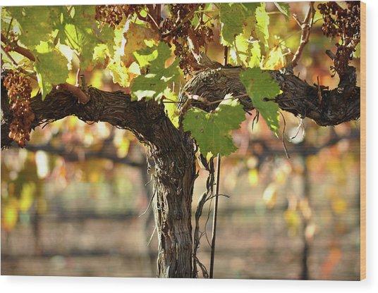 Red Wine Vine Wood Print