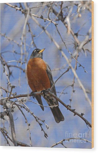 Robin Wood Print by Dennis Hammer