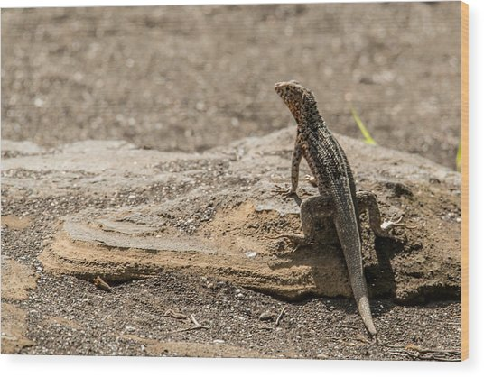 Santiago Lava Lizard Wood Print by Harry Strharsky