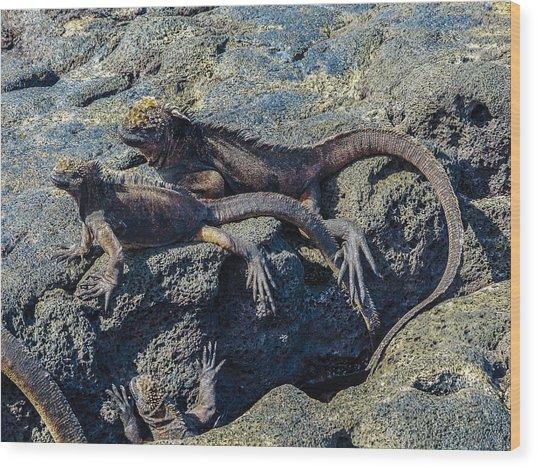 Santiago Marine Iguana Wood Print by Harry Strharsky