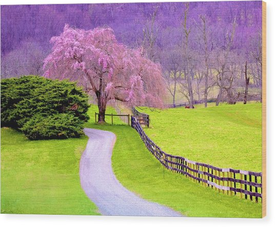 Purple Haze In The Distance Wood Print
