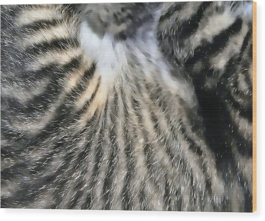 Tabby Texture Wood Print by JAMART Photography