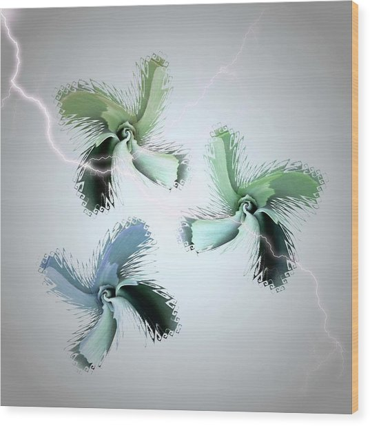 The Thunderbolt Dance Of Rose Butterflies - 1 Wood Print by Jacqueline Migell