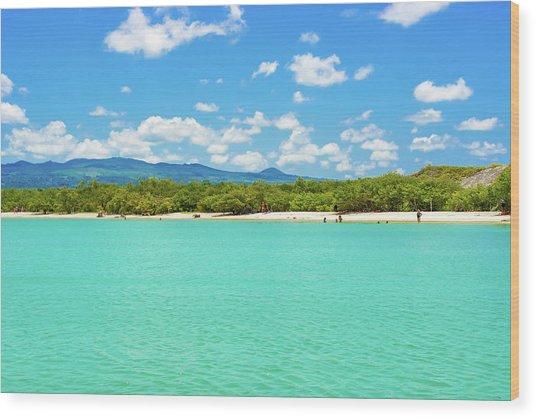 Tortuga Bay Beach At Santa Cruz Island In Galapagos  Wood Print