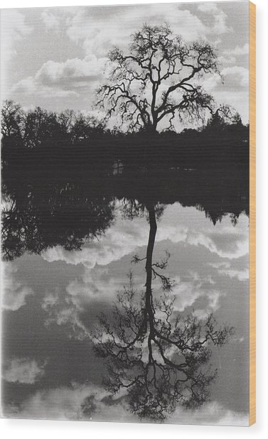 Tree Reflection Sebastopol Ca, Wood Print