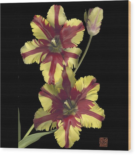 Tulip Wood Print by Lloyd Liebes