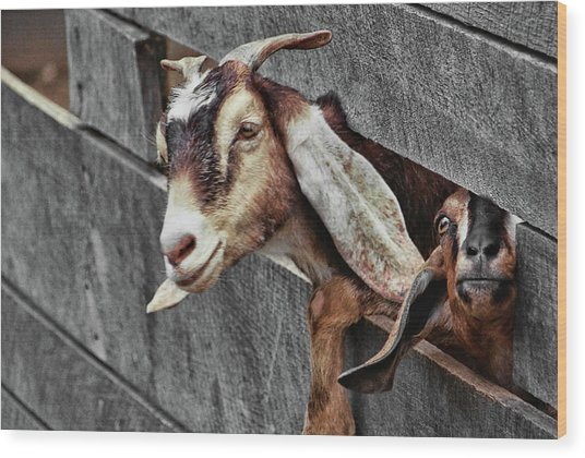 What's Going On? Wood Print by JAMART Photography