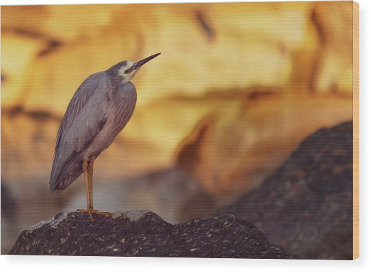 White-faced Heron At The Beach Wood Print