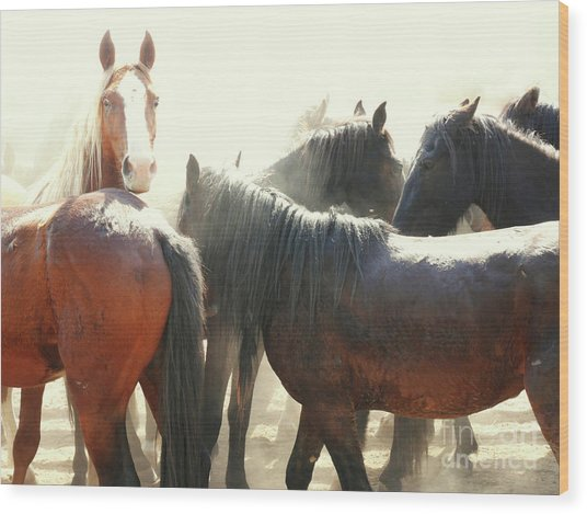 Wild Horses - Australian Brumbies 3 Wood Print