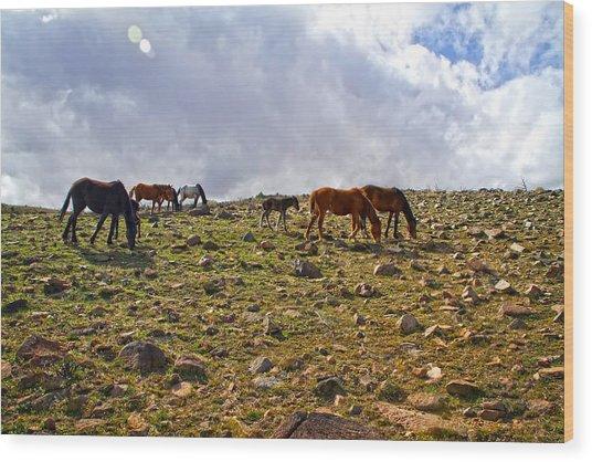Wild Mustang Herd Wood Print