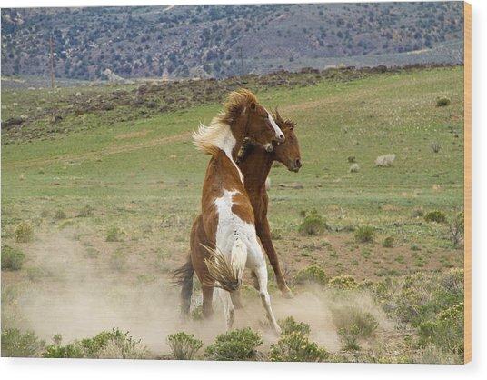 Wild Mustang Stallions Fighting Wood Print