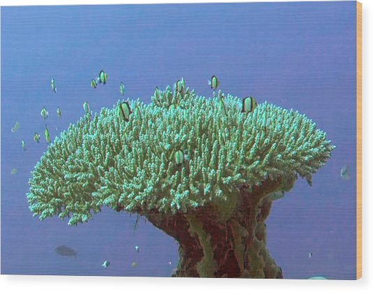 Zanzibar Island Sea  Coral Reef Vegitation Bio Diversity Of Exotic Fish Plants And  Organisims Zanzi Wood Print