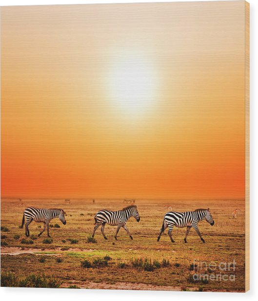 Zebras Herd On African Savanna At Sunset. Wood Print